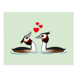 Great Crested Grebes in Love Postcard