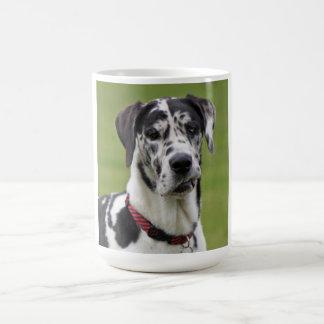 Great Dane dog beautiful photo portrait, gift Coffee Mug