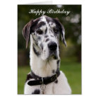 Great Dane dog happy birthday greetings card
