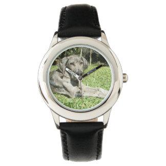 Great Dane Dog Watch