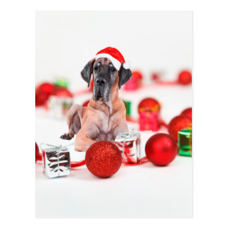 Great Dane Dog with Christmas Ornaments Gifts Postcard