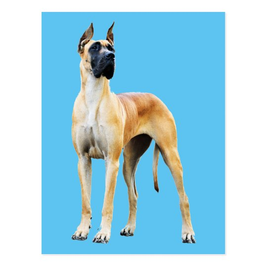 Great Dane Postcard