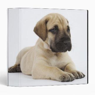 Great Dane puppy Lying in Studio Vinyl Binder
