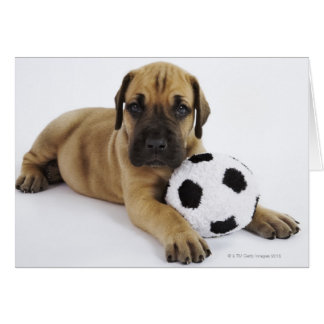 Great Dane puppy with toy soccer ball Card