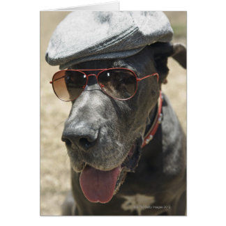 Great Dane wearing hat and sunglasses Greeting Card