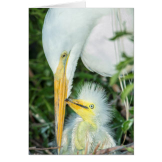 Great Egret and baby egret at Gatorland Card