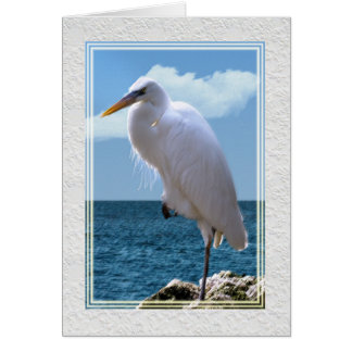 Great Egret at Water's Edge Card
