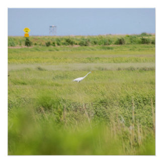 Great Egret Bird Photo Perfect Poster