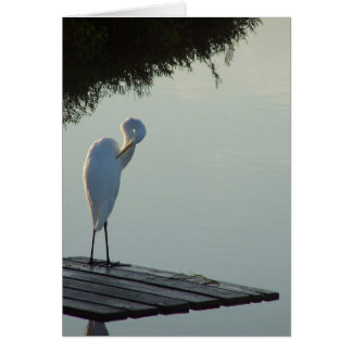 Great Egret Grooming Card