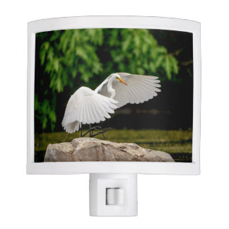 Great Egret Night Lights