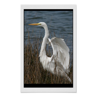 Great Egret Print