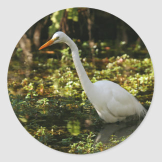 Great Egret Wading in Everglades Classic Round Sticker
