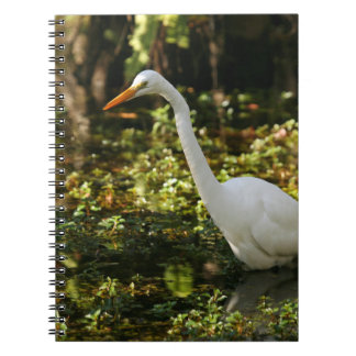Great Egret Wading in Everglades Notebook