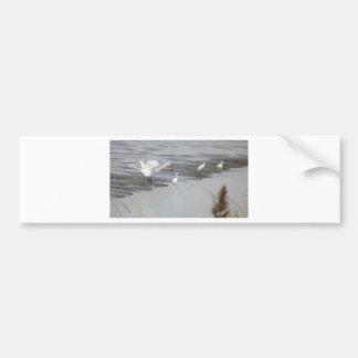 Great Egrets in a swamp Bumper Sticker