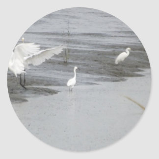 Great Egrets in a swamp Classic Round Sticker
