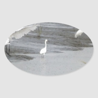 Great Egrets in a swamp Oval Sticker