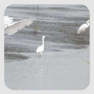 Great Egrets in a swamp Square Sticker