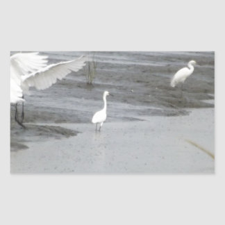 Great Egrets in a swamp Sticker