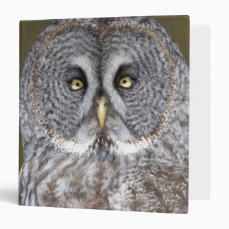 Great gray owl close-up, Canada Binders