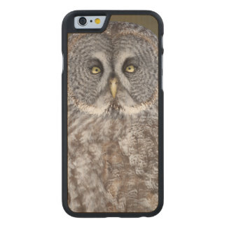 Great gray owl close-up, Canada Carved Maple iPhone 6 Case