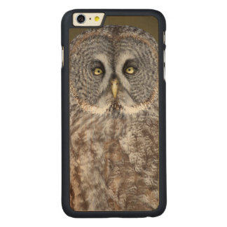 Great gray owl close-up, Canada Carved Maple iPhone 6 Plus Case