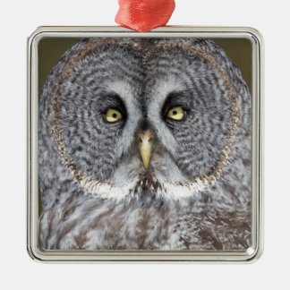 Great gray owl close-up, Canada Silver-Colored Square Ornament