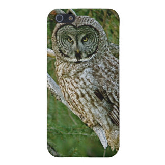 Great Gray Owl iPhone Case iPhone 5 Case