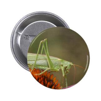 Great Green Bush-Cricket  (Tettigonia viridissima) 2 Inch Round Button