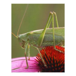 Great Green Bush-Cricket  (Tettigonia viridissima) Personalized Letterhead