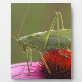 Great Green Bush-Cricket  (Tettigonia viridissima) Plaque