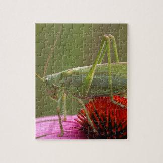 Great Green Bush-Cricket  (Tettigonia viridissima) Puzzle