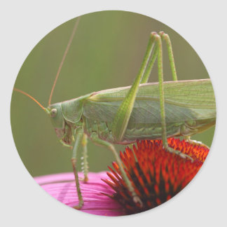 Great Green Bush-Cricket  (Tettigonia viridissima) Round Sticker