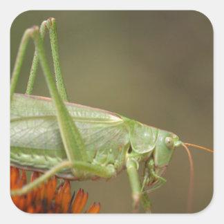 Great Green Bush-Cricket  (Tettigonia viridissima) Square Sticker