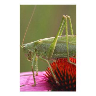 Great Green Bush-Cricket  (Tettigonia viridissima) Stationery