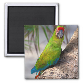 Great green macaw on a tree square magnet