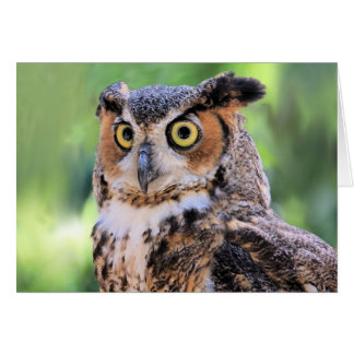 Great Horned Owl Blank Card
