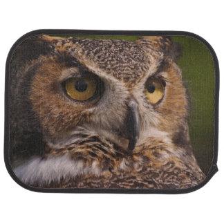 Great Horned Owl Gifts Great Horned Owl Gift Ideas On