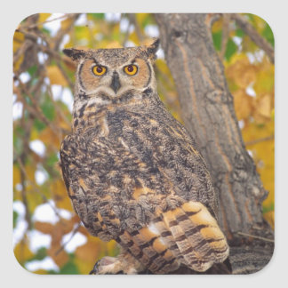 Great Horned Owl, Bubo virginianus, Native to Square Sticker