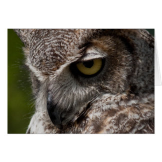 Great Horned Owl (Bubo virginianus) notecard