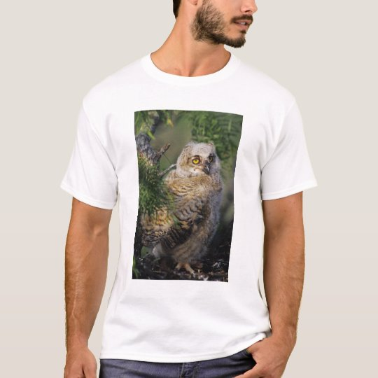 Great Horned Owl, Bubo virginianus, young in T-Shirt