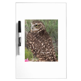 Great Horned Owl Dry Erase Board