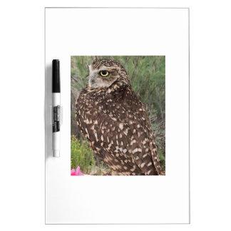 Great Horned Owl Dry Erase White Board