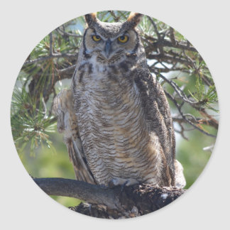 Great Horned Owl in the Tree Classic Round Sticker