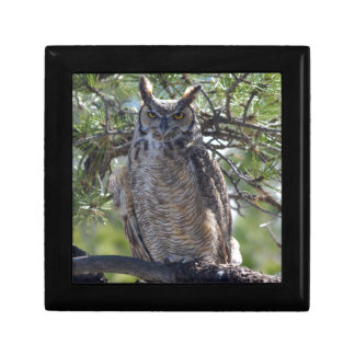 Great Horned Owl in the Tree Gift Box