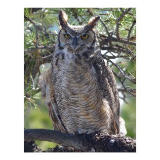 Great Horned Owl in the Tree Letterhead