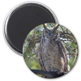Great Horned Owl in the Tree Magnet