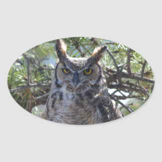 Great Horned Owl in the Tree Oval Sticker
