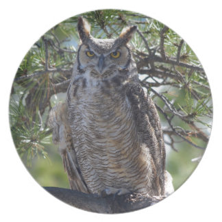 Great Horned Owl in the Tree Plate