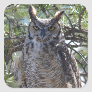 Great Horned Owl in the Tree Square Sticker