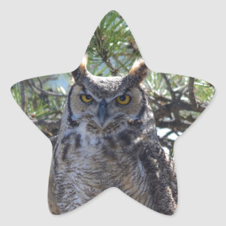 Great Horned Owl in the Tree Star Sticker